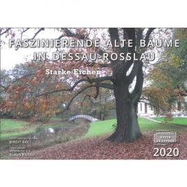 Faszinierende alte Bäume in Dessau-Roßlau: Starke Eichen